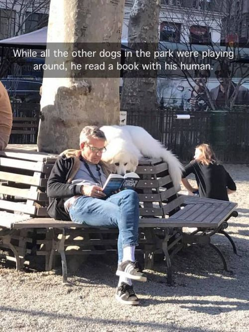 This is my kind of dog! Reading in the park with her human... #dogs #doglovers