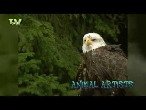 New videoclip in the StockShot PermaStore: #Birds Of Prey 05 >> http://youtu.be/cJC1muX3mnA