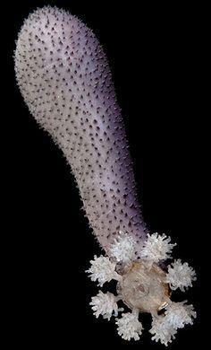 Glass jellyfish by Leopold and Rudolf Blaschka | Blaschka Glass ...
