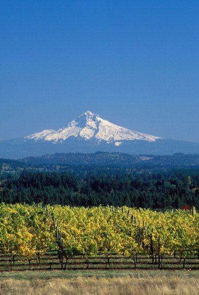 BERAN VINEYARDS  Hillsboro, Oregon