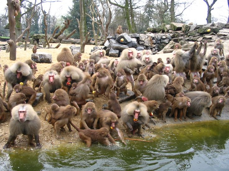 dierentuin emmen