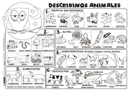 Describimos Animales P BN