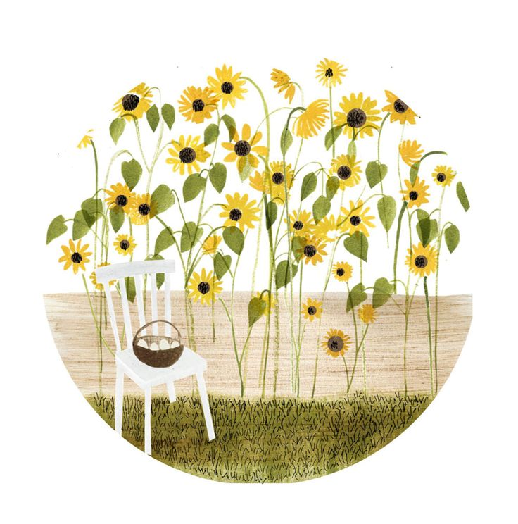 by Hannah Bailey, sunflowers, illustration, nature, drawing, pencil