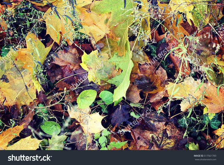 Leaves Texture Stock Photo 517561783 : Shutterstock