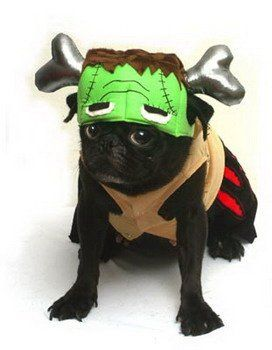 Frankensteinu0027s Monster Halloween costume for pets - //.wons.co  sc 1 st  Pinterest & The 42 best Halloween Costumes images on Pinterest | Halloween ...