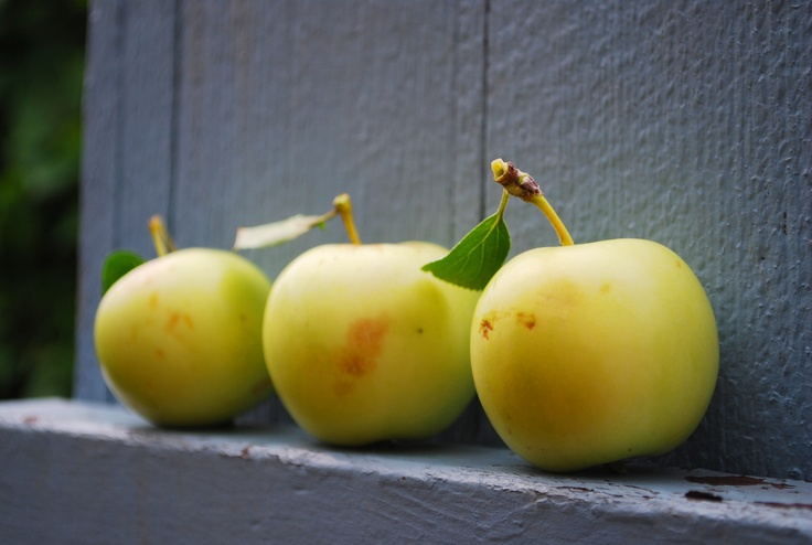 Crab apples from my tree. By me.