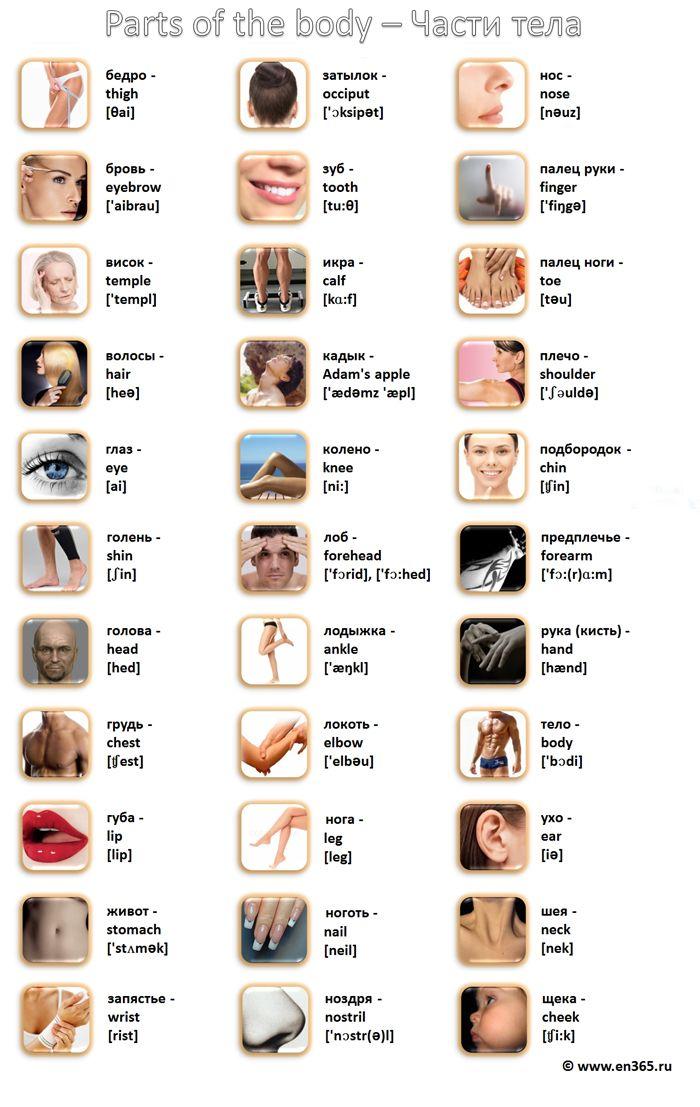 Картинки по запросу название частей тела по англ с транскрипцией