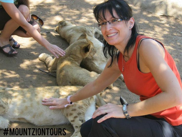 Visit #LionPark with #mountziontours and get the opportunity to interact with a #lions.