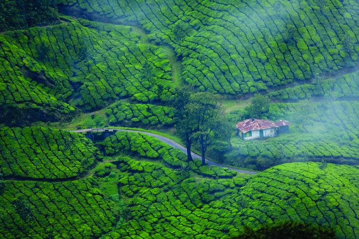 Munnar - a view of true nature