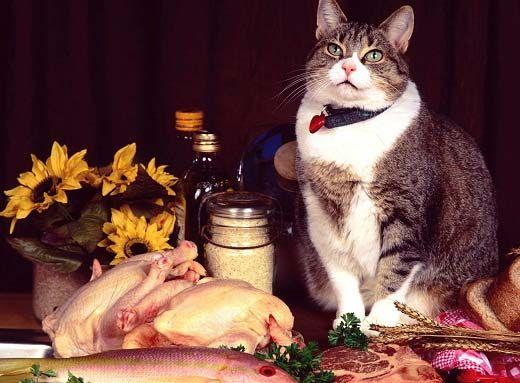 Рейтинг лучших кормов холистик класса. Узнайте чем отличаются холистик корма для кошек от других. Преимущества и ведущие производители.