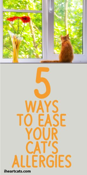 5 Ways To Ease Your Cats Allergies