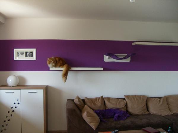 die besten 25 ideen zu cats auf pinterest hausgemachtes hundespielzeug haustiere und selber. Black Bedroom Furniture Sets. Home Design Ideas