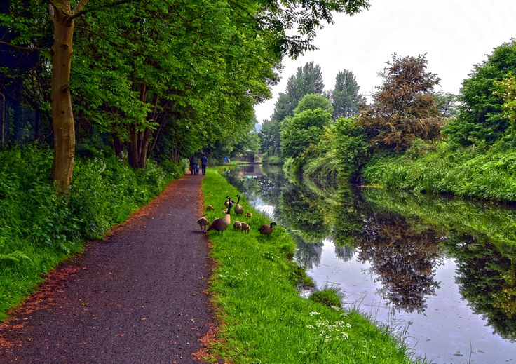 Taken on the Calder & Hebble Navigation at Copley, West Yorkshire. I love picturing the canals near my and this was taken on the 11th June 2016 on 1 of my many walks along the canal.