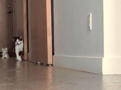 Y los primeros intentos con éxito de los ingenieros felinos en tiempos de guerra para crear gatos señuelo convincentes para engañar al enemigo.