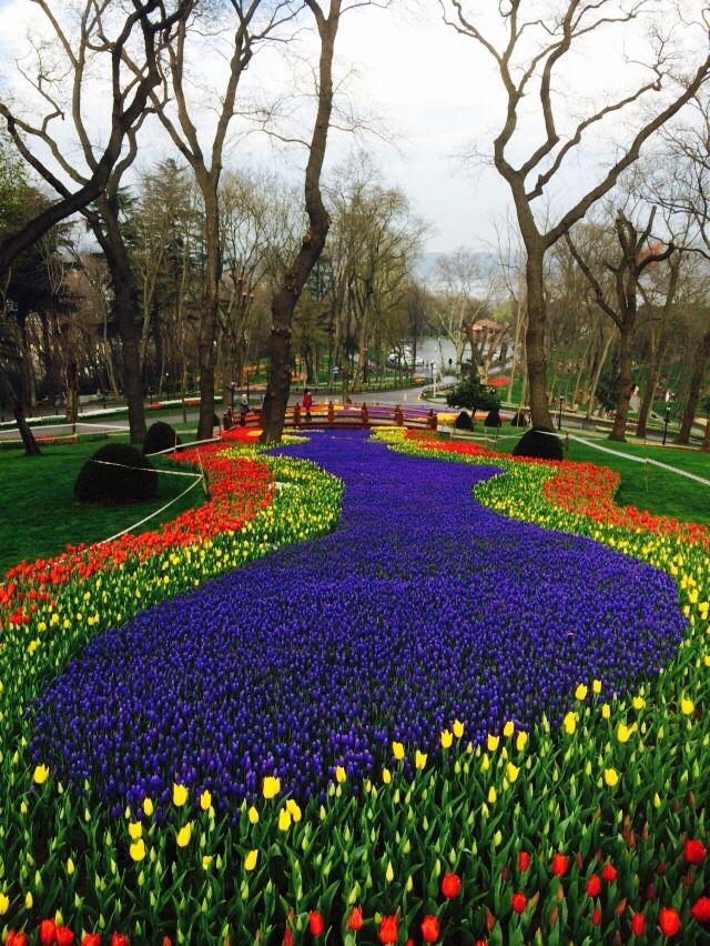Emirgan Park'ı  Laleler Tulip