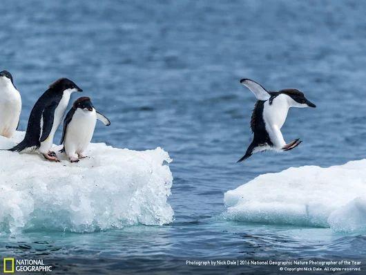 Adorable penguin photo #JustTooCute ❤️