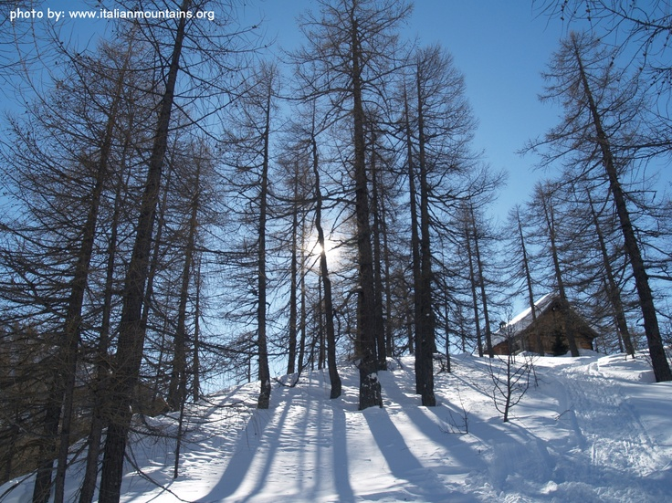 the sun peeps through the pine trees in an enchanted landscape covered by snow at Devero, magnificent unspoilt village in the Italian Alps 110 km from Milan