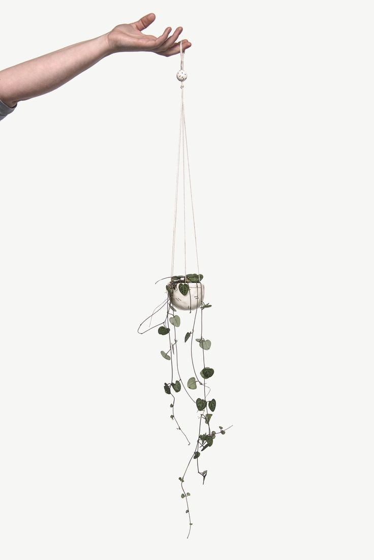 https://councilofobjects.com.au/shop/medium-hanging-planter Medium Hanging Planter. Styling: Elise Short of Council of Objects Photography: Sven Kovac Location: The Props Dept.