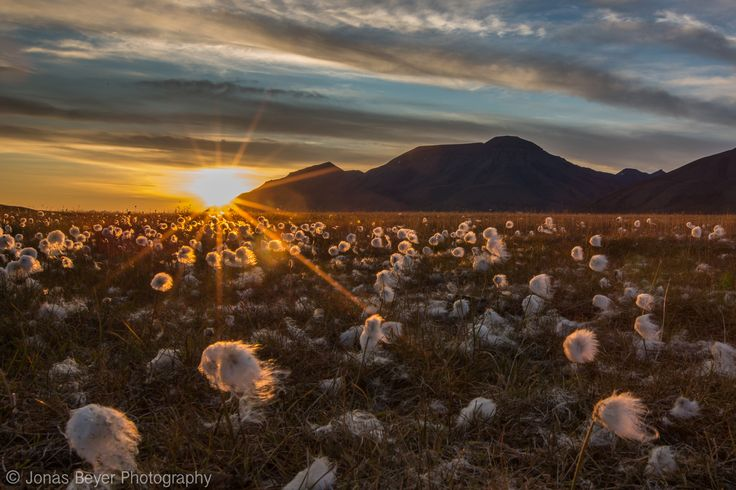 Svalbard   Jonas Beyer Photography