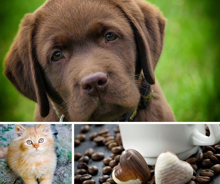 #Thursdaythoughts #Puppies, ginger #kittens, freshly cut grass, coffee and chocolate = perfect world..and yours?