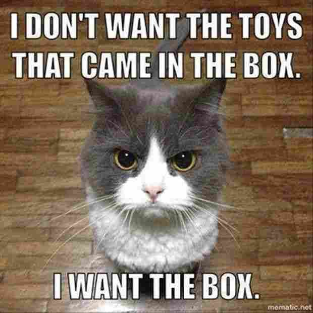 Funny Cat Memes Dump 2018 54 Pictures Funny Cats Funny Animals Funny Cat Memes