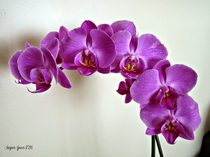 Sugar & Spice & All Things ? Nice: Orchid Objectivity