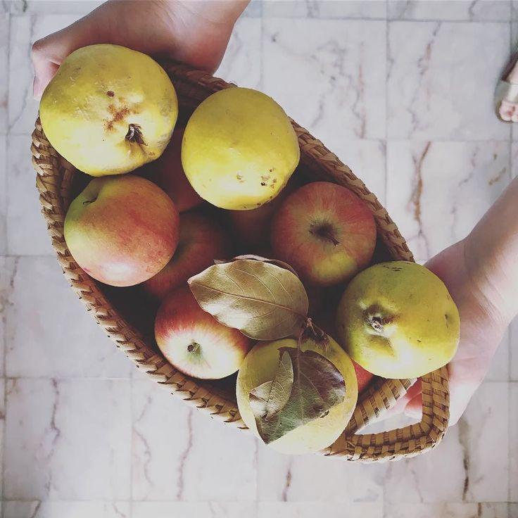 Se quiseres transformar estás maçãs e marmelos em crumble tens uma receita disponível em http://ift.tt/1hCcpDN