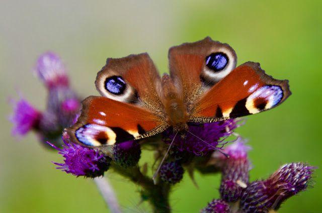 """Die Raupe trainiert für ihren Schmetterlingstanz   Namaste! Ihr fragt euch warum ihr in gewissen Situationen steckt und nicht weiterkommt? Warum ihr euer Leiden zwar erkannt und bis ins Detail analysiert habt aber euch nicht daraus befreien könnt? Den Spruch """"Als die Raupe glaubte die Welt geht unter wurde sie zum Schmetterling"""" habt ihr jetzt schon öfter bei mir gelesen. Bis es zu dieser Geburt des Schmetterlings kommt sind jedoch Anstrengung und auch Schmerzen nötig. Veränderung braucht…"""
