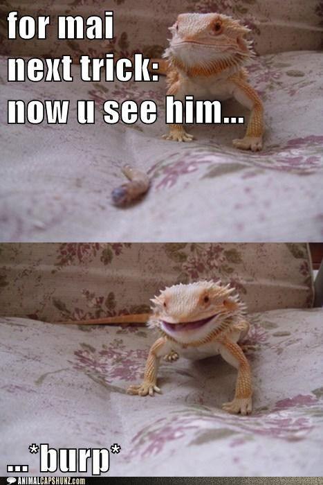 Can you teach a bearded dragon to do tricks? | Yahoo Answers