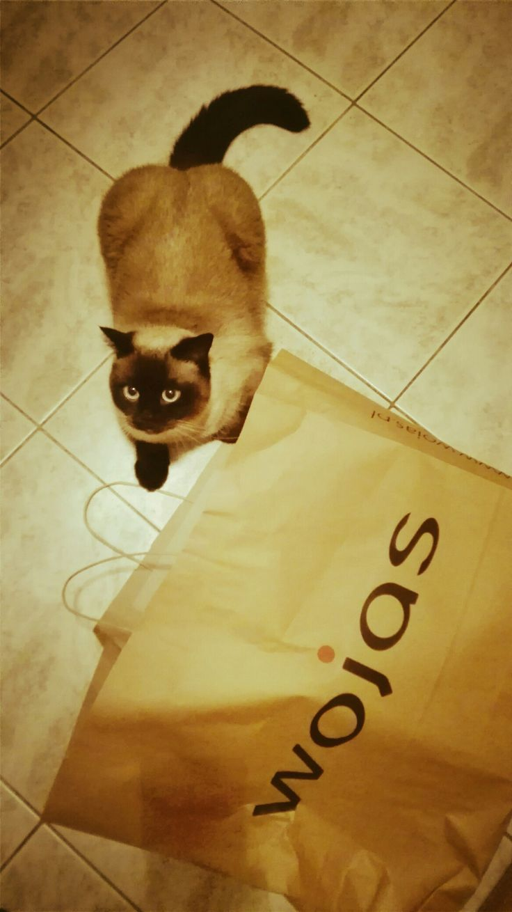 Wojas/quality shoes,cat..oh yeah..