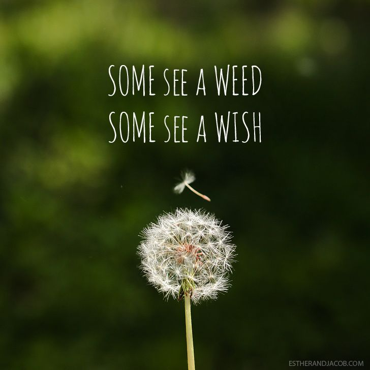 Some see a weed some see a wish quote | Dandelion images | Pictures of spring season | Why I Love Spring. Totally a wish.