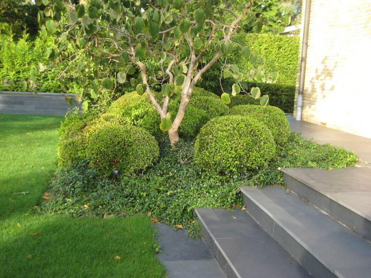 Elders in de tuin beplanting van 'losse' Buxusbollen op het talud. Op de achtergrond is de rand van de strakke natuurstenen vijver te zien.