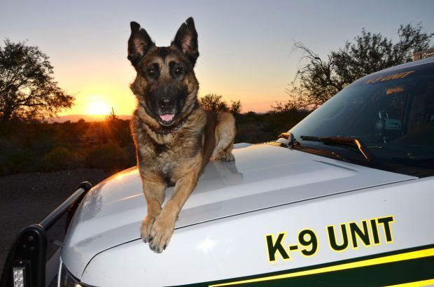 """Pima County sheriff's K-9 dies after freak accident. The deputy and his dog were described by Bañuelos as """"one of the most productive narcotics teams in the history of the Pima County Sheriff's Department Canine Unit. Since February 2011, Ahern and Kilo conducted 263 narcotics searches. The combined total of Kilo's seizures was 4,723 pounds of marijuana, 43 pounds of cocaine, 4 pounds of methamphetamine, a half-pound of heroin, and more than $1 million in U.S. currency."""