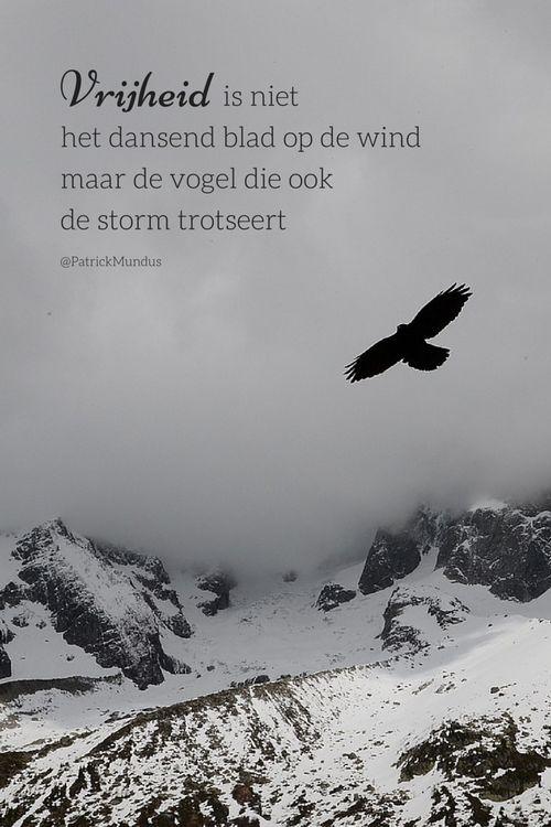 #Vrijheid is niet het dansend blad op de wind maar de vogel die ook de storm trotseert...