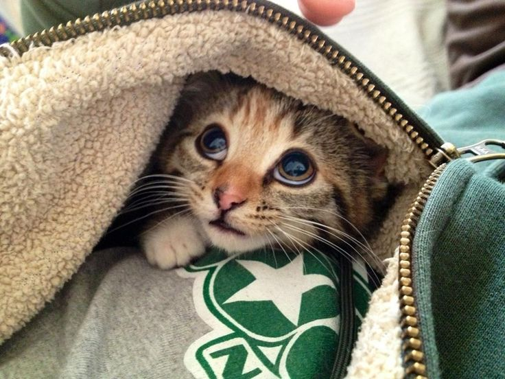 Best Baby Animals Images On Pinterest Animals Adorable