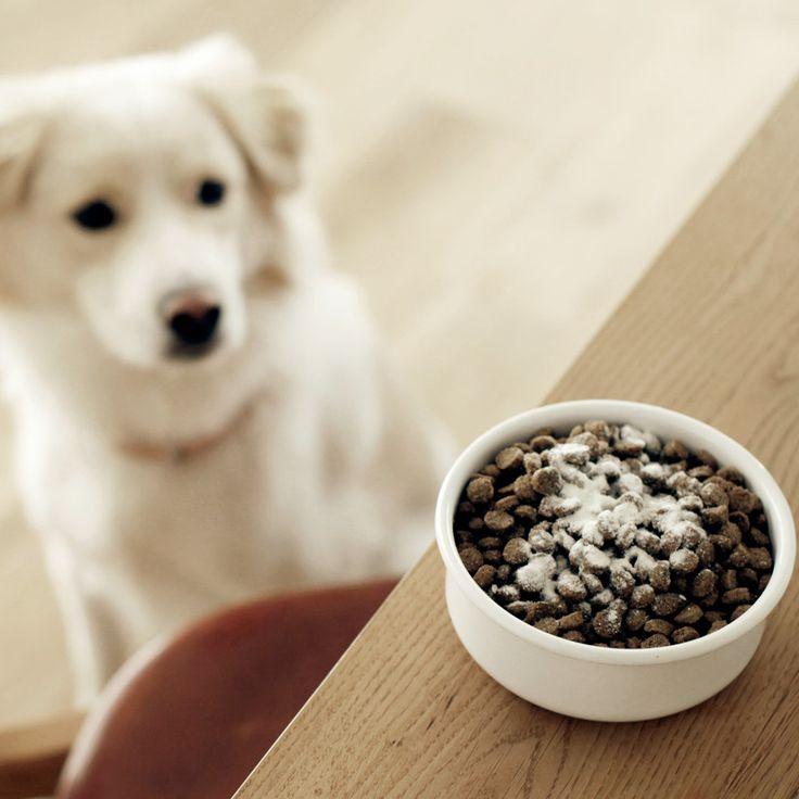 ホリスティックブレンドはホリスティック医学を専攻する獣医推奨、ヒューマングレードのオーガニック素材を使用したドッグフードです