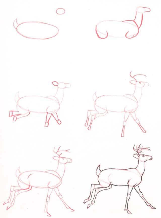 Learn to draw: deer