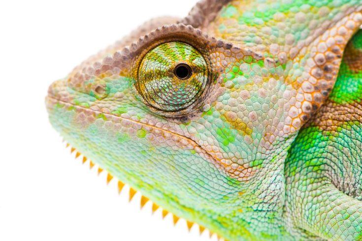 Saiba mais algumas características e fatos sobre esse réptil fascinante