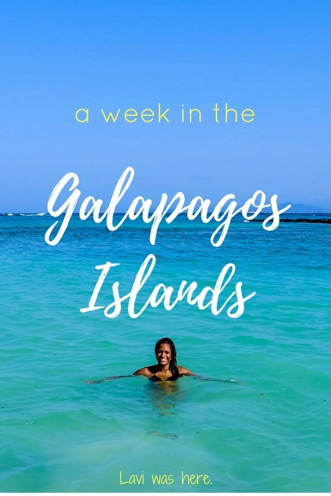 A Week in the Galapagos Islands | There's nowhere in the world like the Galapagos Islands. I'm not kidding; marine life from all different parts of the world collides here. | Lavi was here.