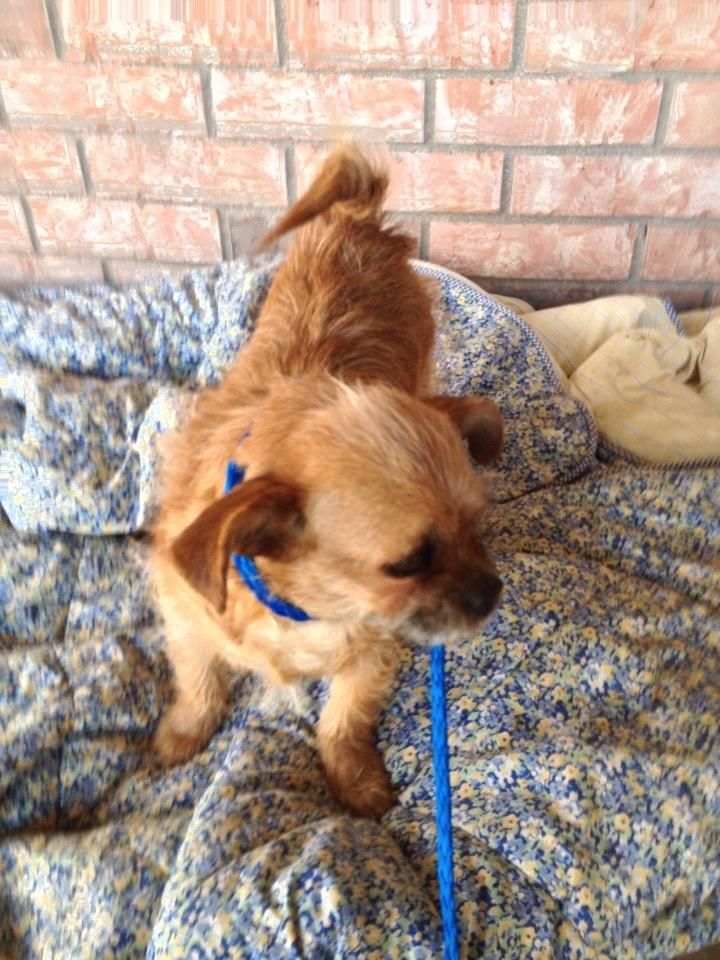 Adopt Juliette on Adoptable Small Breeds Dogs, Lap