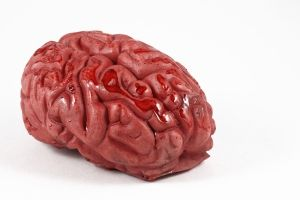 Pubers opvoeden door toepassing van breinkennis - MamaSchool « MamaSchool #pubers opvoeden #tips opvoeding