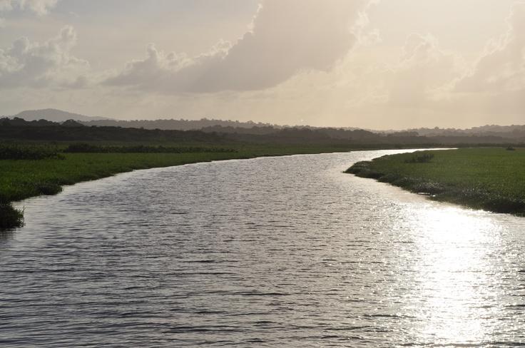 Marais de Kaw - Guyane - Paradis de l'écotourisme, la Guyane se situe au nord-est de l'Amérique du Sud, entre le Surinam et le Brésil.   En déroulant l'infini tapis vert de sa forêt amazonienne (8 millions d'hectares) sur 90% du territoire, la Guyane réserve souvent ses charmes et ses mystères par la voie navigable. Parcourue en tous sens par de nombreux fleuves et rivières, cette destination s'offre au fil de l'eau.  #guyane