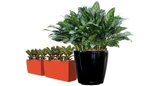 Enhance the beauty of your restaurant with the indoor plants service of Foliage indoor plant hire from Melbourne. With us you will get best and perfect plants and pots for commercial places and offices. With our free site inspection, we can help you to get the best plants at reasonable rates.