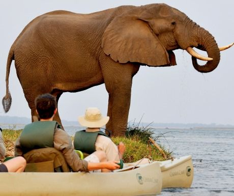 Elephants and canoeing in Chiawa Zambia