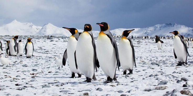 Tues. Jan 20th 2015 is Penguin Awareness Day!