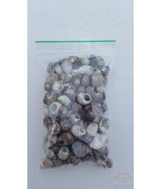 Schelp Alikruik (Littorina littorea) 150 gr