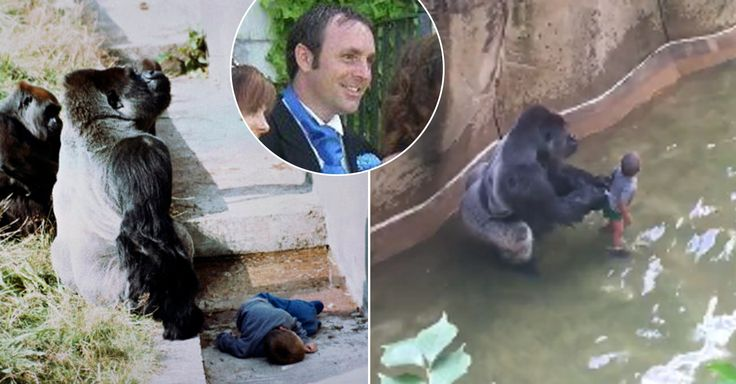 Guy Who Was Saved By A Gorilla When He Was Five Speaks Out About Harambe Shooting [VIDEO]