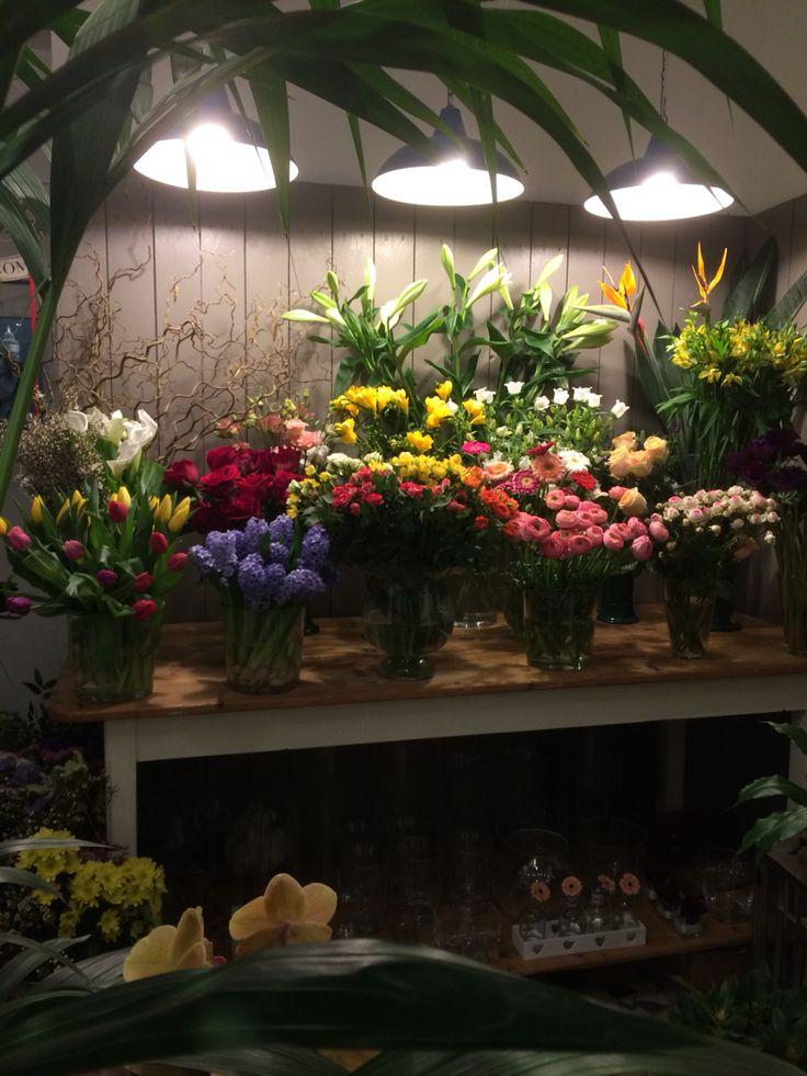 I fiori di katia