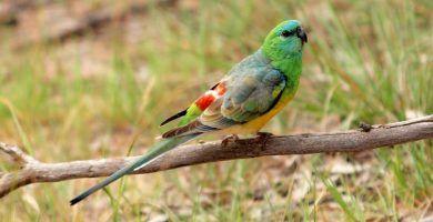 Periquitos | Aves Exóticas. Romuald habla de SEO con redes sociales un saludo.