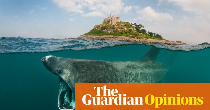 From the BBC's Winterwatch to scuba divers discovering a submerged ancient forest, volunteers are the future, writes marine conservation officer Fiona Gell